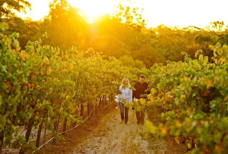 Sevenhill Cellars, Clare Valley, SA © Adam Bruzzone, South Australian Tourism Commission