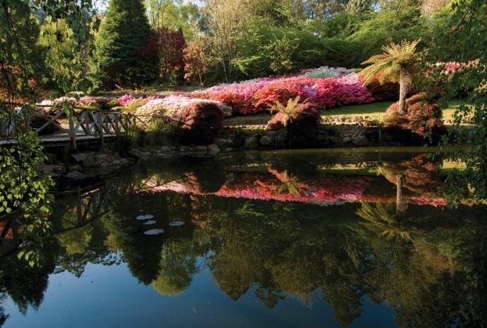 National Rhododendron Gardens, Olinda, VIC © Parks Victoria