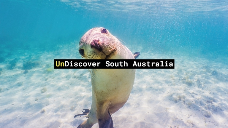 Swim with sea lions, Baird Bay, Eyre Peninsula, SA © David Edgar / SATC