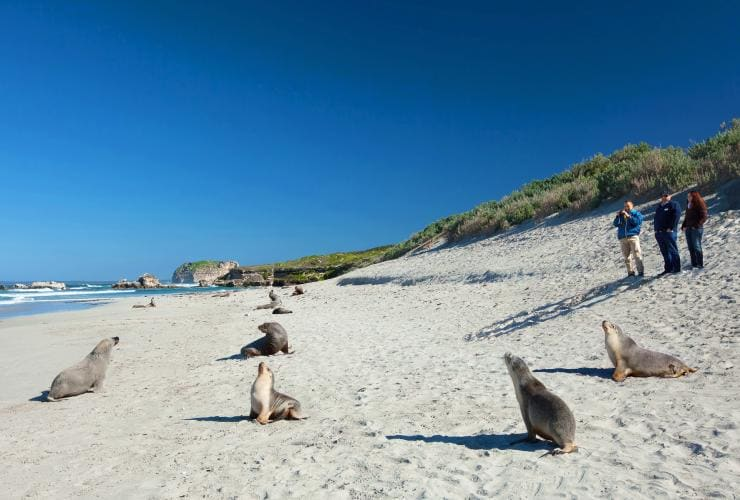 Seal Bay Conservation Park, Kangaroo Island, SA © Ben Goode, South Australian Toursim Commission
