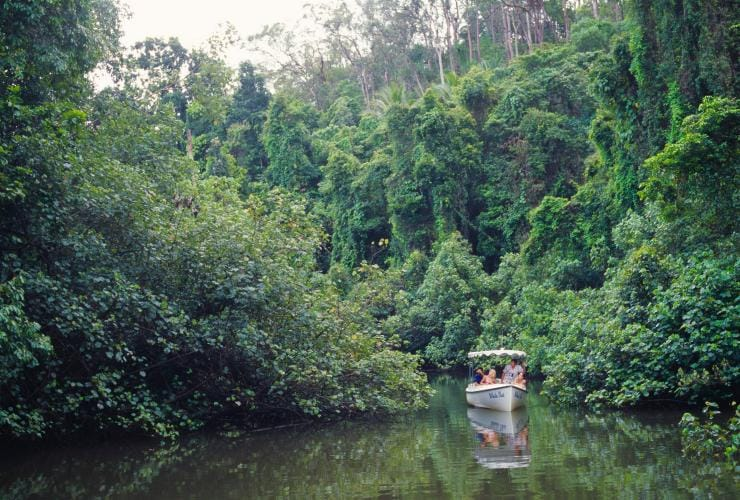 Daintree River Electric Boat Cruises, Daintree National Park, QLD © Tourism Australia