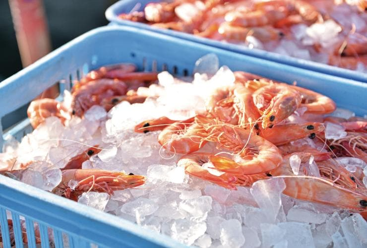 Freshly-caught prawns on ice at Mooloolaba © Tourism and Events Queensland