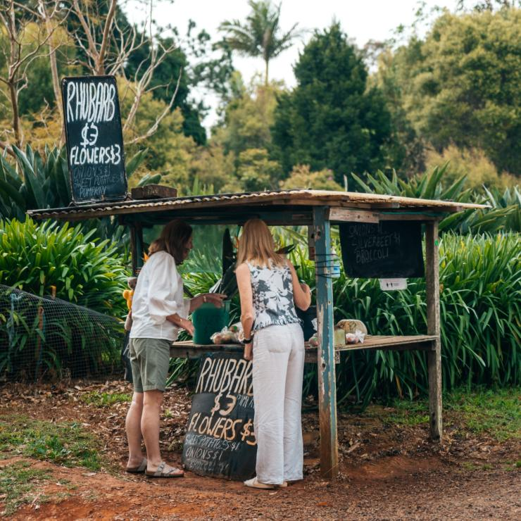Women picking out local produce from a farm stall on Tamborine Mountain © Tourism and Events Queensland