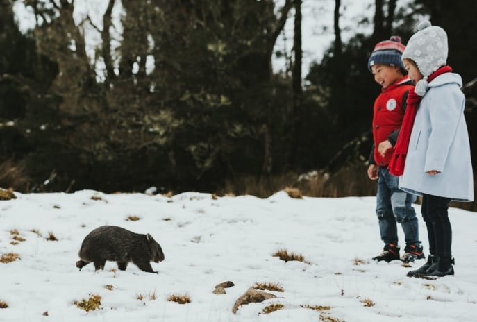 Wombat, Cradle Mountain-Lake St Clair National Park, TAS © Paul Fleming