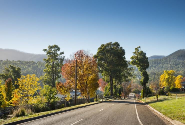 Road to Marysville, Yarra Valley, VIC © Robert Blackburn