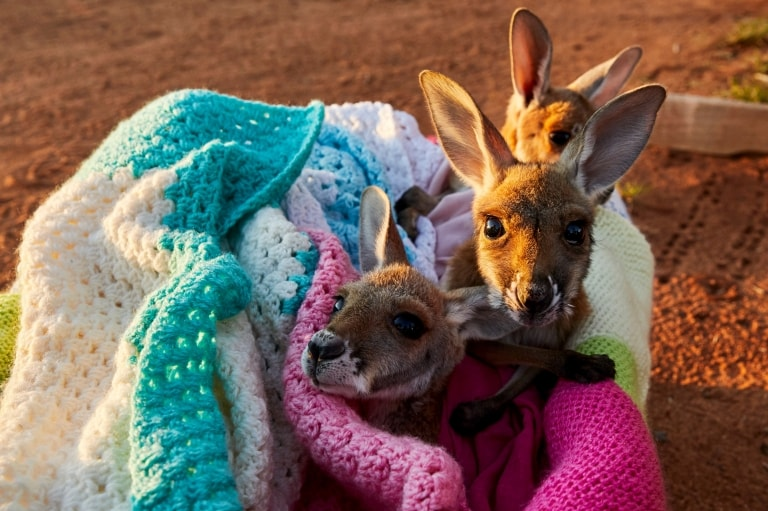 The Kangaroo Sanctuary, Alice Springs, NT © Tourism Australia