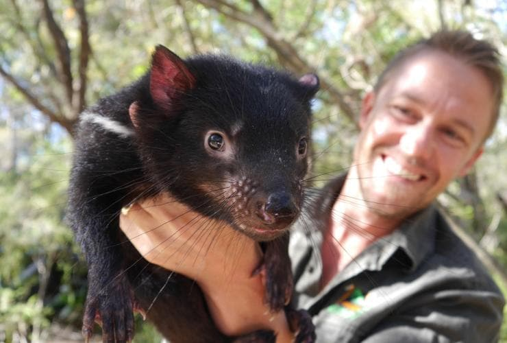Tim Faulkner with a Tasmanian devil, Australian Reptile Park, Somersby, NSW