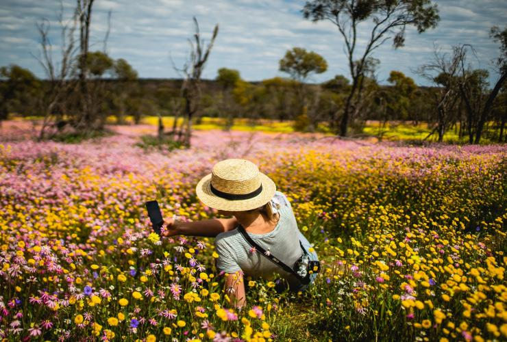 Woman sitting in a field of wildflowers in Coalseam Conservation Park © Tourism Western Australia