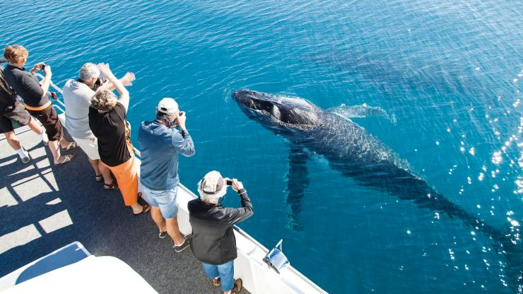 Hervey Bay Whale Watching, Hervey Bay, QLD © Matthew Taylor, Tourism and Events Queensland