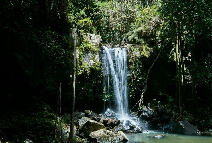 Curtis Falls, Tamborine Mountain, QLD © Tourism and Events Queensland