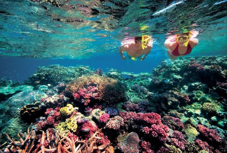 Snorkelling, Agincourt Reef, Great Barrier Reef, QLD © Tourism and Events Queensland