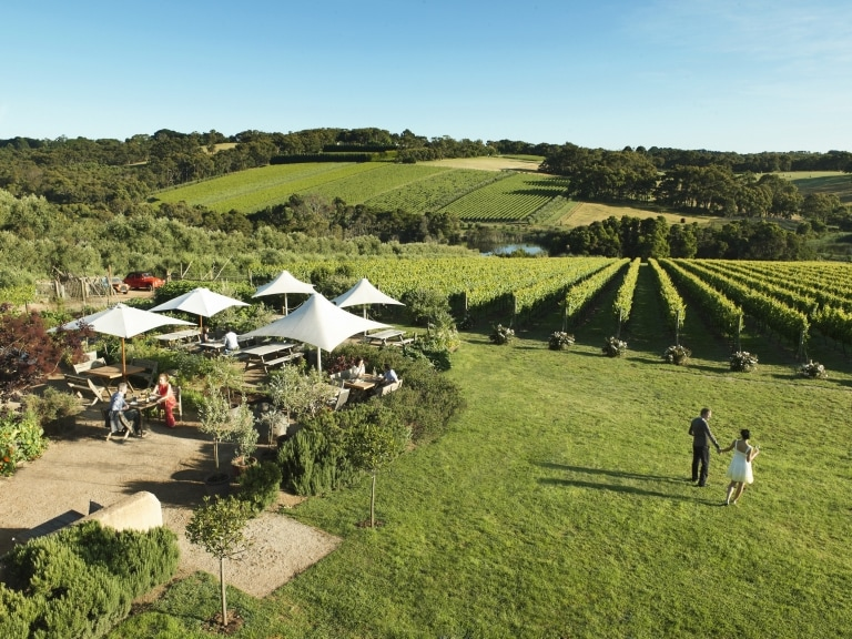 Montalto Winery & Olive Grove, Mornington Peninsula, VIC © Montalto Vineyard & Olive Grove