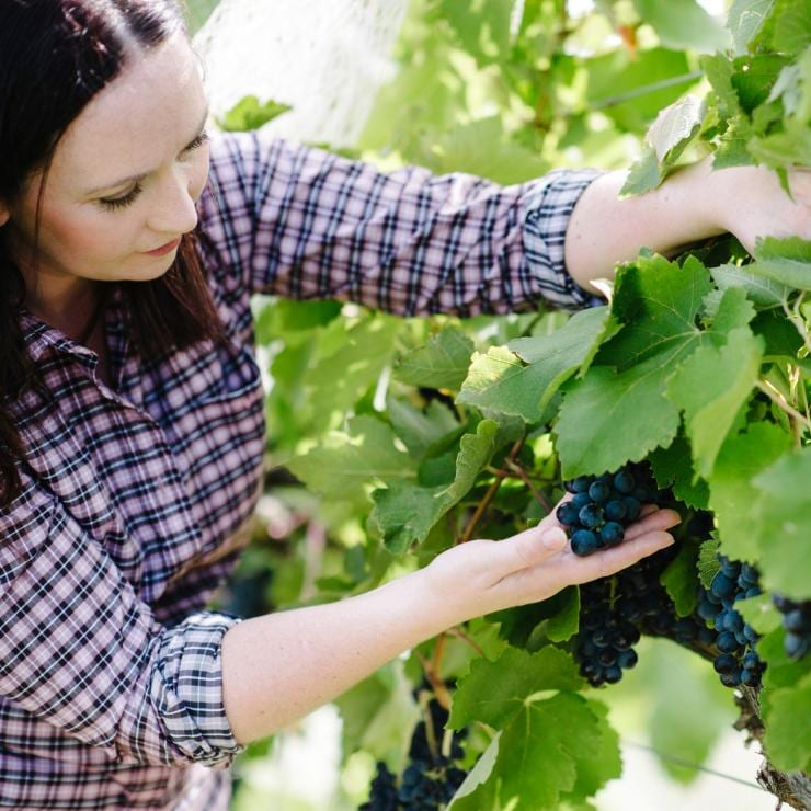 Stephanie checks the grapes at The Vintner's Daughter, Murrumbateman, New South Wales © Stephanie Helm