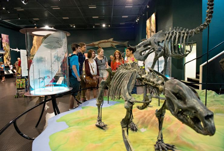 Animal skeletons at the Museum and Art Gallery of the Northern Territory in Darwin ©Tourism NT/Shaana McNaught