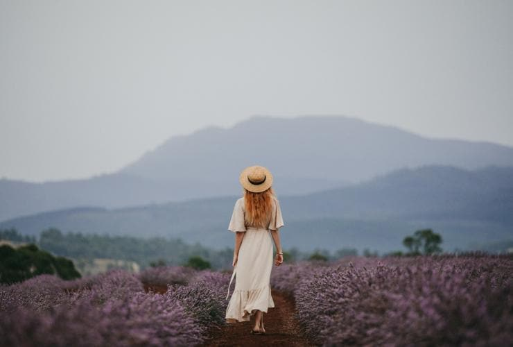 Bridestowe Lavender Estate, outside Launceston, TAS © Jarrad Seng