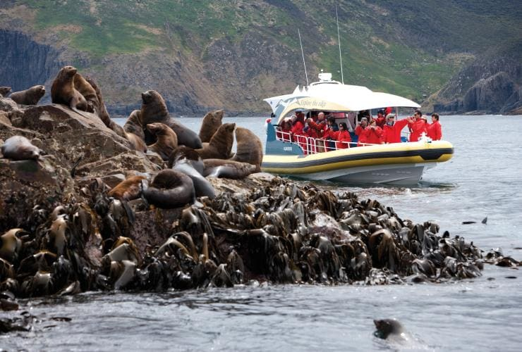 Bruny Island Cruises, Pennicott Wilderness Journeys, Bruny Island, TAS © Tourism Tasmania, Joe Shemesh