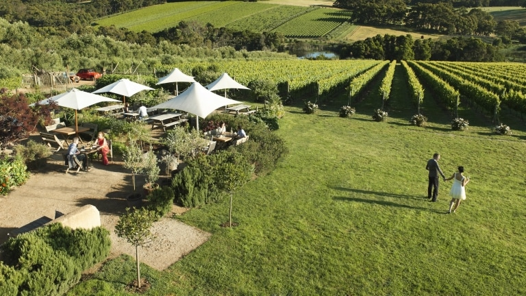 Montalto Vineyard & Olive Grove, Red Hill South, VIC © Robyn Lea, Brand Victoria