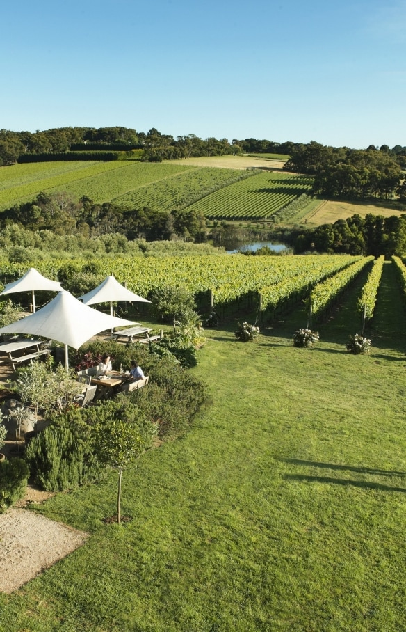 Montalto Vineyard & Olive Grove, Red Hill South, VIC. © Robyn Lea/Brand Victoria