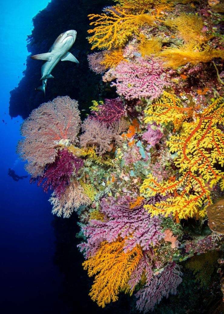 Great Barrier Reef, Queensland © Tourism and Events Queensland/Lorenzo Ballarin