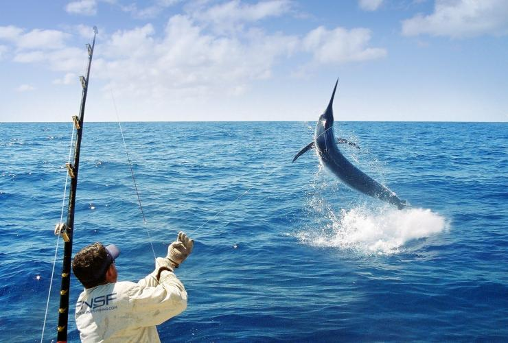 Fishing marlin, Port Douglas, QLD © Far North Sports Fishing