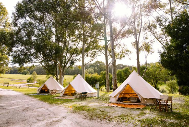 Three tents set up on the grass in Margaret River © Wild Goose Camping