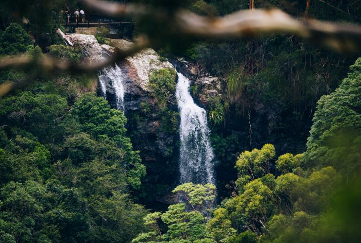 Warrie Circuit at Springbrook National Park © Destination Gold Coast