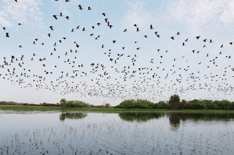 Birds flying above wetlands at Yellow Water in Kakadu National Park in the Northern Territory © Gary Topic