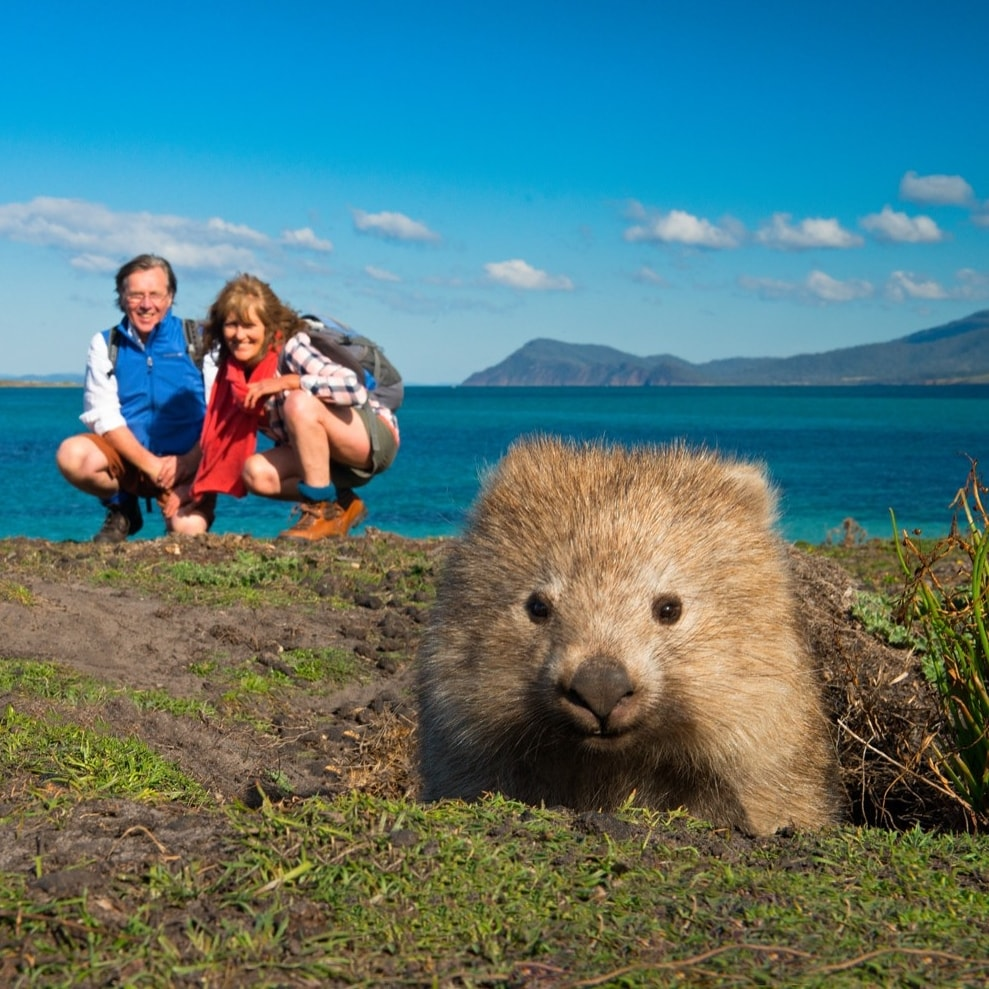 Hikers pose with a wombat along the Maria Island Walk © The Maria Island Walk