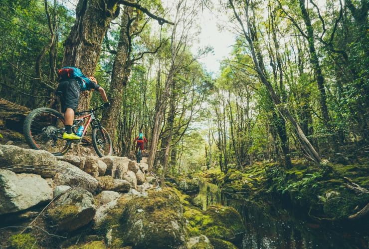 Man mountain biking at Blue Tier in Tasmania © Flow Mountain Bike