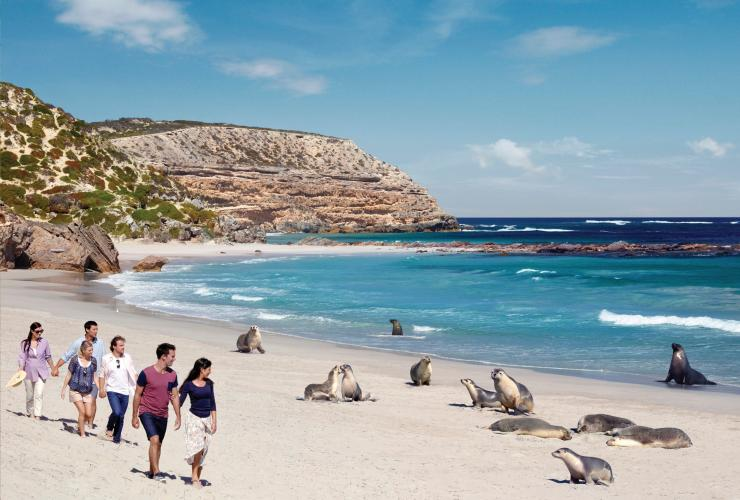 Parc de conservation de Seal Bay, Kangaroo Island, SA © South Australian Tourism Commission