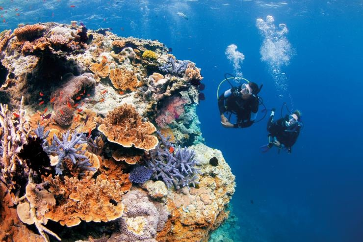 Pixies Garden, Grande Barrière de Corail, QLD © Tourism and Events Queensland
