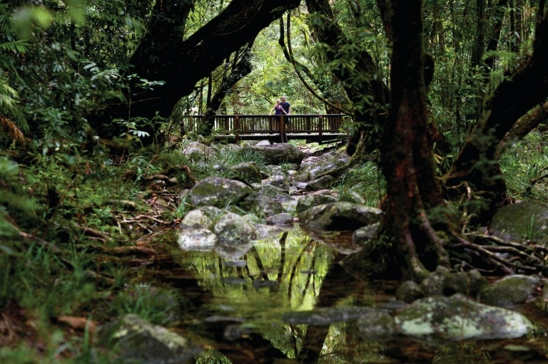 Rainforest Creek, Cape Tribulation, Cairns, QLD © Tourism and Events Queensland