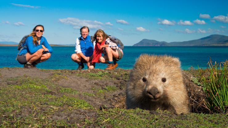 Wombat commun, The Maria Island Walk, Maria Island, TAS © The Maria Island Walk