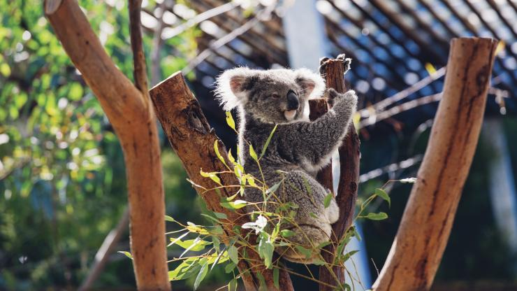 Australia Zoo, Sunshine Coast, QLD © Australia Zoo