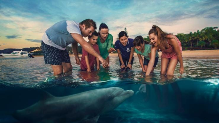 Nourrir les dauphins sauvages au Tangalooma Island Resort, Moreton Island, QLD © Brisbane Marketing