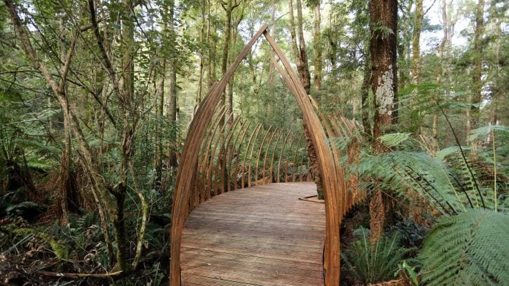 Tarkine Forest Adventures, Dismal Swamp Forest Reserve, TAS © Tourism Australia
