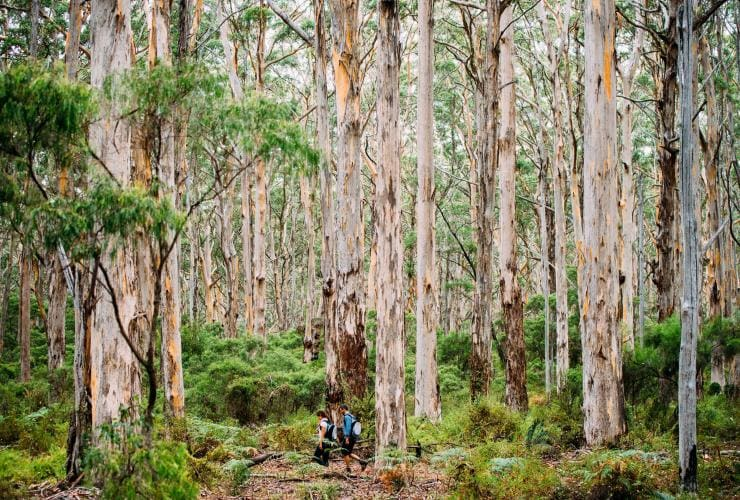 Boranup Forest, région de Margaret River, WA © Elements Margaret River