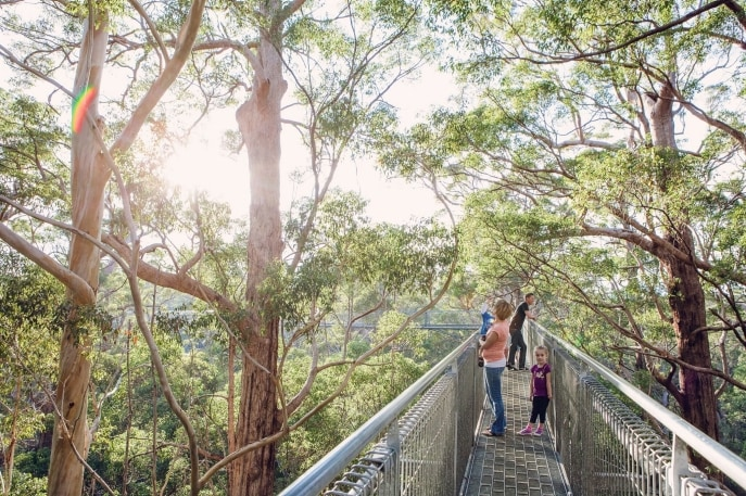 Valley of the Giants Tree Top Walk, Nornalup, WA. © WA Parks and Wildlife