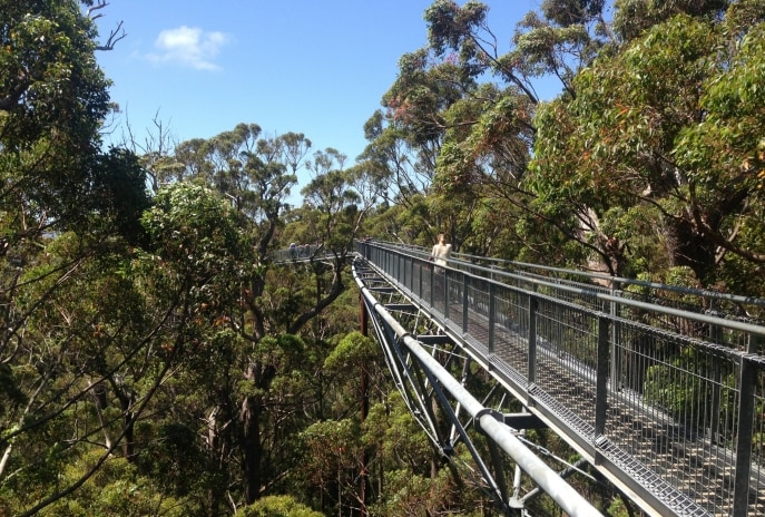 Valley of the Giants Tree Top Walk, Walpole-Nornalup National Park, Australie Occidentale © Tourism Australia