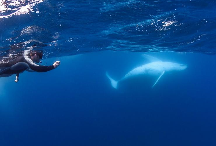 Swimming with the whales, Sunreef Mooloolaba, Sunshine Coast, QLD © Migration Media