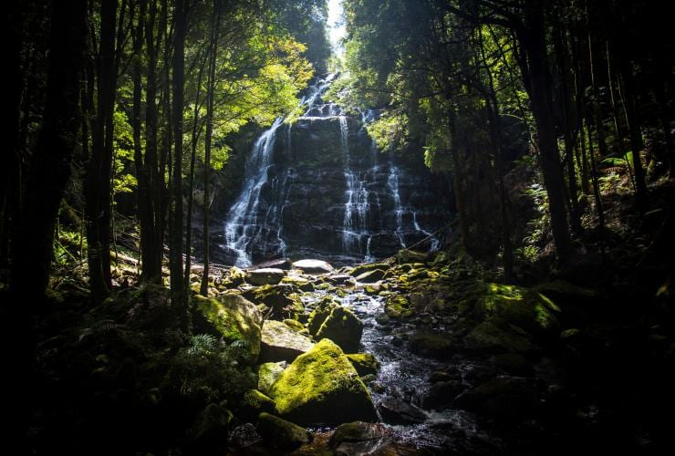 Nelson Falls, Franklin-Gordon Wild Rivers National Park, TAS © Tourism Australia, Graham Freeman