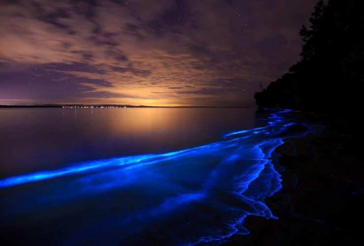 Bioluminescence in Jervis Bay, NSW © Maree Clout