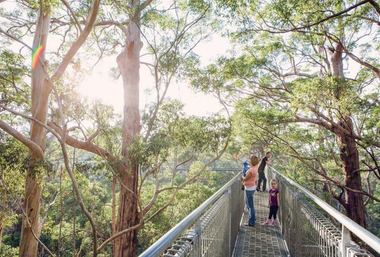 Valley of the Giants Tree Top Walk, Nornalup, WA © WA Parks and Wildlife