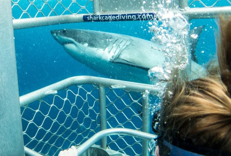 Shark diving, Neptune Islands, SA © Tourism Australia