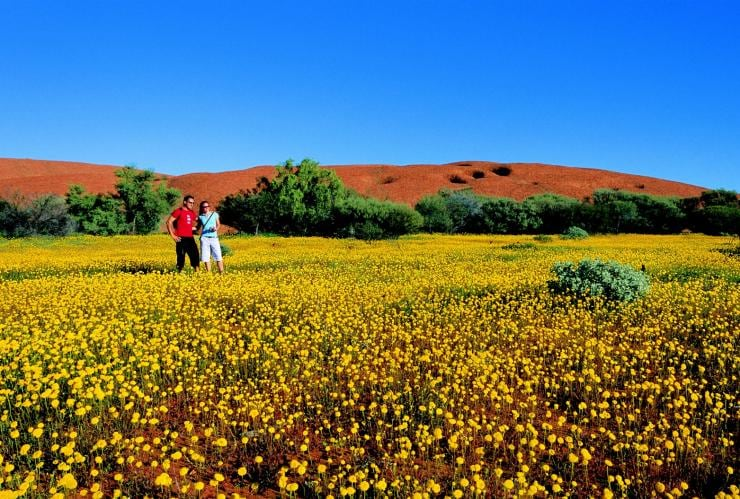 Wildflowers on Wooleen Station, Western Australia © Tourism Western Australia