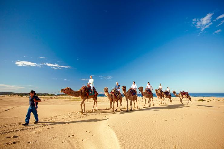 Camel train at Stockton Beach, Port Stephens, NSW © Tourism Australia