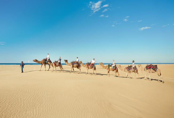 Camel rides, Stockton Sand Dunes, Stockton Beach, Port Stephens © Tourism Australia, Destination NSW