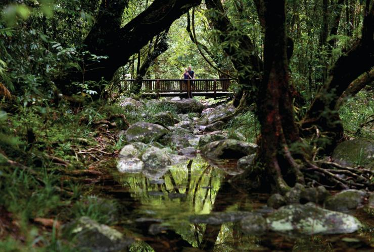 Mossman Gorge, Daintree Rainforest, Cairns region, QLD © Tourism and Events Queensland
