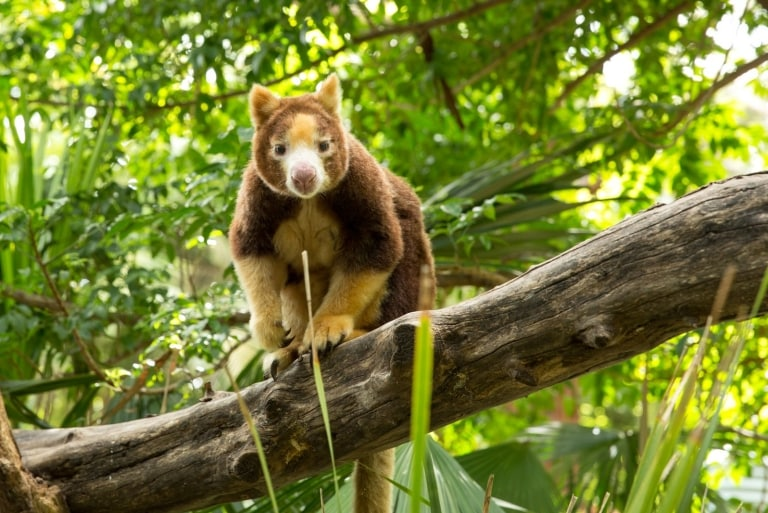 Lucky Bay, Cape Le Grand National Park, WA © Tourism Australia