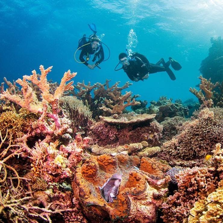 Dua penyelam skuba berenang di sisi terumbu karang di Clam Gardens di Great Barrier Reef Queensland © Tourism and Events Queensland
